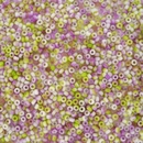 10g Size 11/0 Miyuki seed beads in Funky Orchid