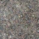 10g Size 11/0 Miyuki seed beads in Graphite Rainbow