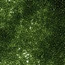 Size 11 Transparent Olive Miyuki seed beads 158