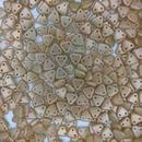 50 x Halo Ethereal Myrrh two hole CzechMate Triangles